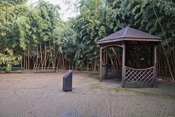Fontanellato, Labirinto della Masone, by Franco Maria Ricci: one corner in the labyrinth with bamboo plants,  (photo)