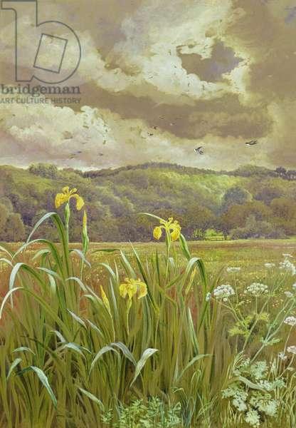 Irises and Cow Parsley