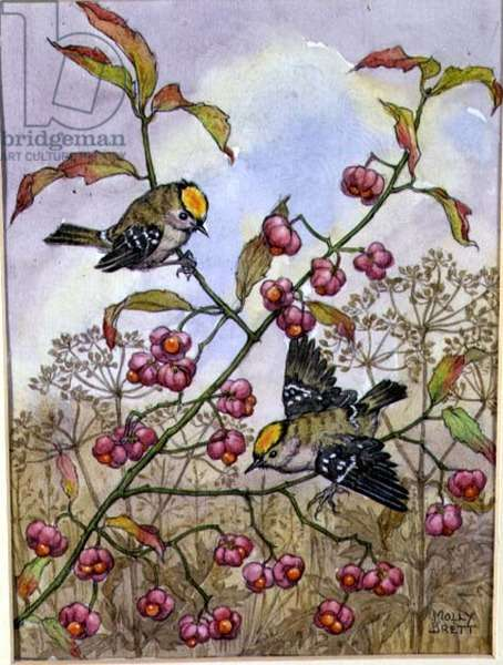 Spindleberries and Goldcrests