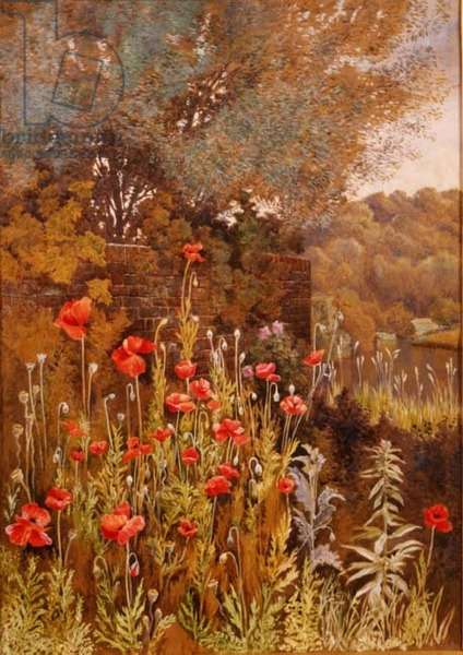 Poppies on a River Bank