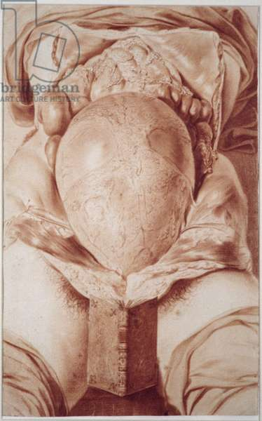 MS Hunter 658 Plate XXVI Drawing from William Hunter's (1718-83) 'Anatomy of the Human Gravid Uterus', 1774 (chalk on paper)