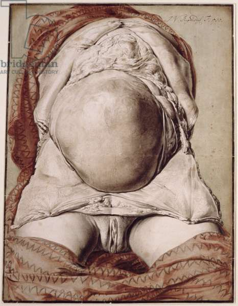 Ms Hunter 658 Plate I Drawing for William Hunter's (1718-83) 'Anatomy of the Human Gravid Uterus', 1774 (chalk on paper)