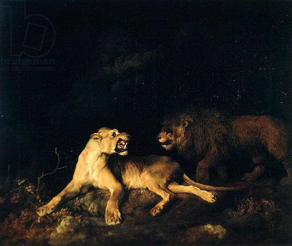 Lion and Lioness (oil on canvas)