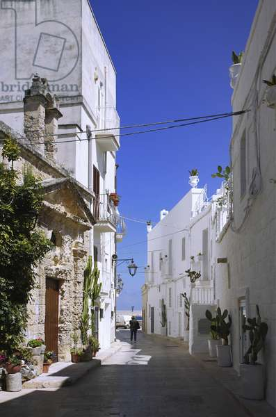 Italy: Puglia: town of Monopoli: old town and alley