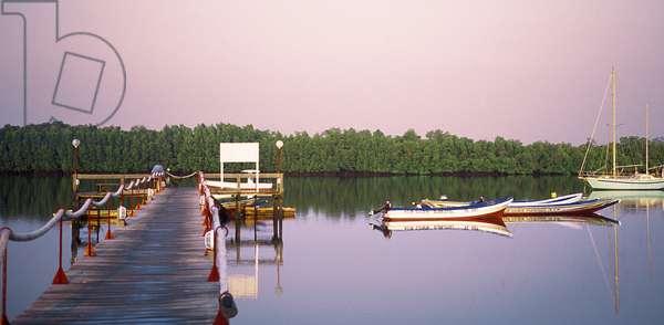 Senegal N* 49: Saloum River