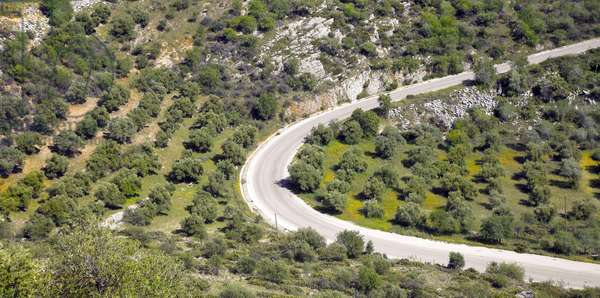 Spain - Andalusia - Olive Fields