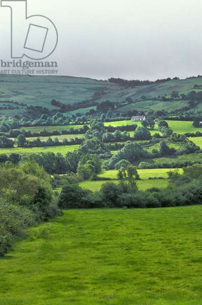 Ireland - Earl of Offaly: Bocage