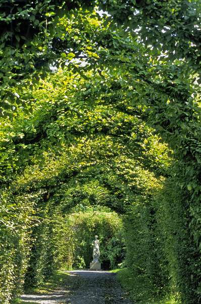Ireland - Count of Offaly: Garden a la Francaise of Birr Castle: Allee covered in charm