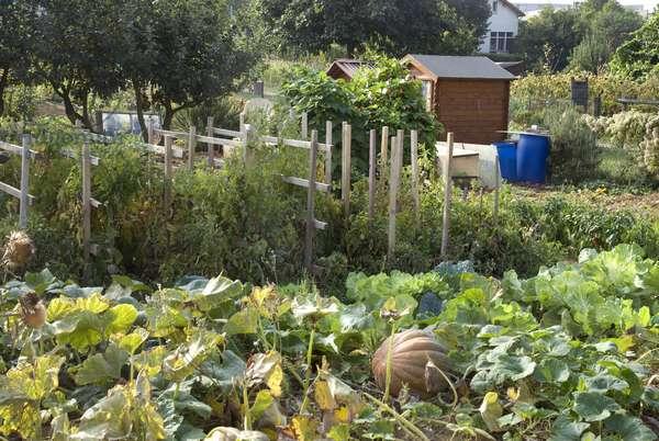 Working garden/Vegetable garden/Garden shed
