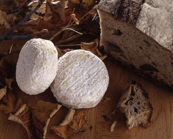 Cheese/Picodon