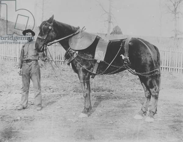Donohoe (first name unknown) and his horse (b/w photo)