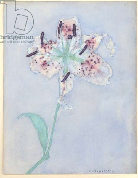 Lily, after 1921 (w/c on paper)