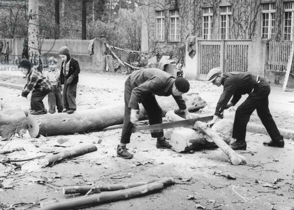 Men collecting firewood due to the fuel shortage during the Berlin Blockade, Berlin, 1948, (b/w photo)