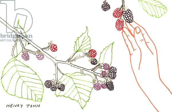 Blackberry Picking, 2008-09 (mixed media)