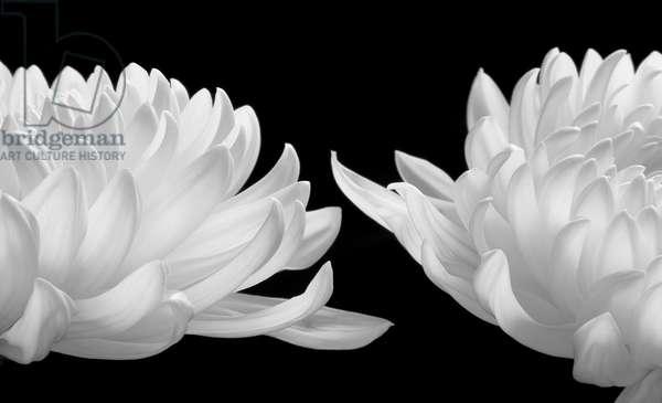 Talking Zen, 2006 (Piezography b/w photo)