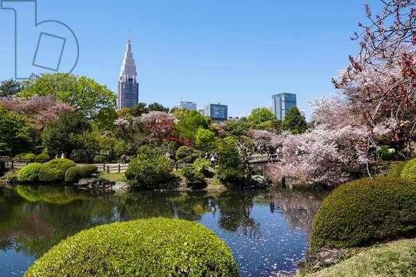 Shinjuku Gyoen National Garden, Tokyo, Japan (photo)