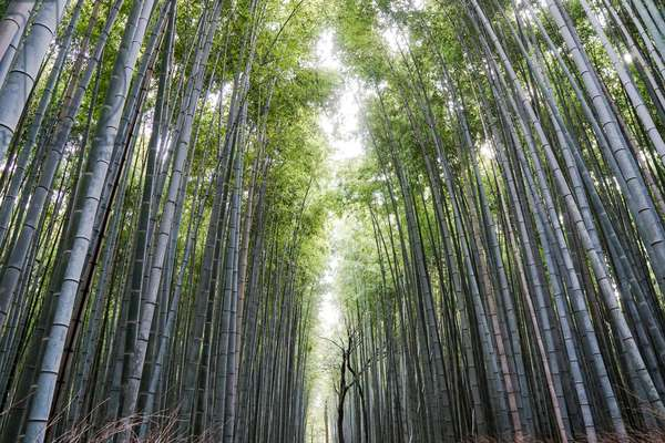 Arashiyama Bamboo Forest, Kyoto, Japan (photo)