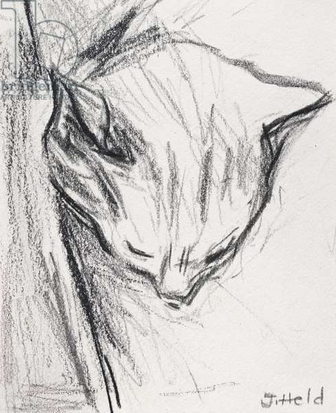 Sleeping Cat, 2015, (pencil)