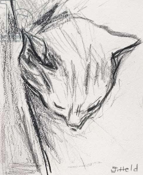 Sleeping Cat, 2015, (pencil)
