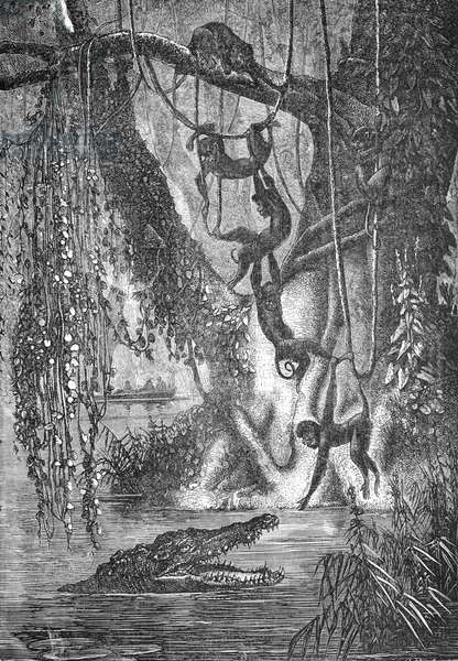 Alligator Hunting Monkeys, 1880 (engraving)