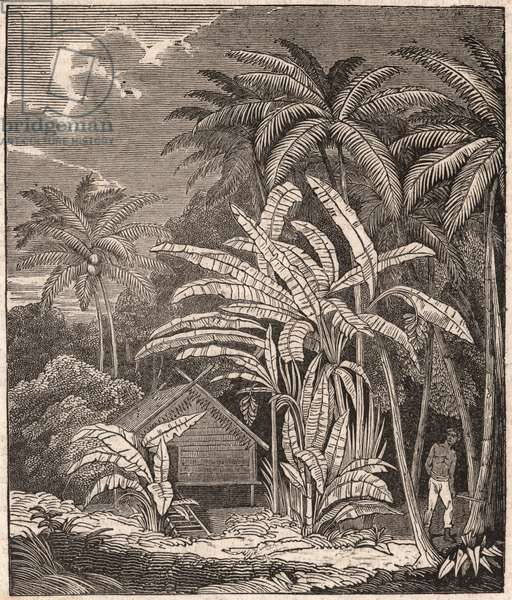 View of a tropical forest with banana trees, huts and inhabitants (engraving)