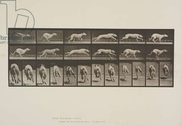 Plate 710 from Animal Locomotion, 1887 (collotype on paper)