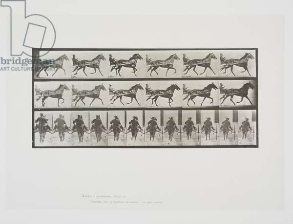 Plate 594 from Animal Locomotion, 1887 (collotype on paper)