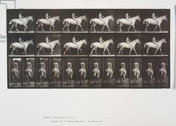 Plate 581 from Animal Locomotion, 1887 (collotype on paper)