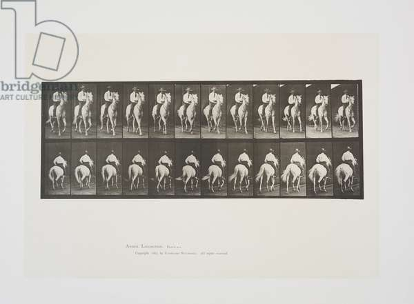 Plate 604 from Animal Locomotion, 1887 (collotype on paper)
