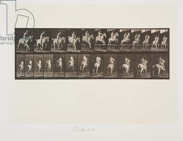 Plate 647 from Animal Locomotion, 1887 (collotype on paper)