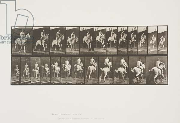 Plate 646 from Animal Locomotion, 1887 (collotype on paper)
