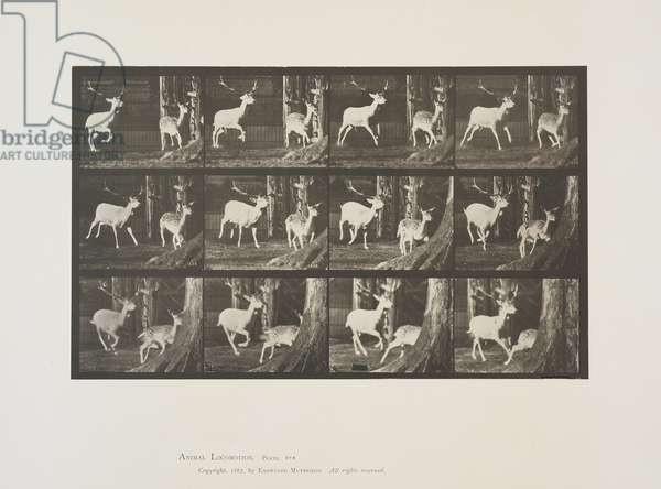 Plate 686 from Animal Locomotion, 1887 (collotype on paper)