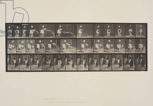 Plate 404 from Animal Locomotion, 1887 (collotype on paper)