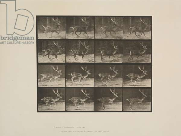 Plate from Animal Locomotion, 1887 (collotype on paper)