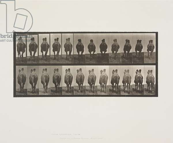 Plate 741 from Animal Locomotion, 1887 (collotype on paper)