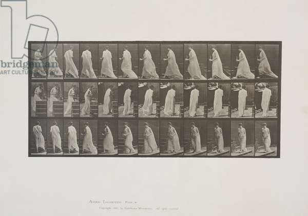 Plate 97 from Animal Locomotion, 1887 (collotype on paper)
