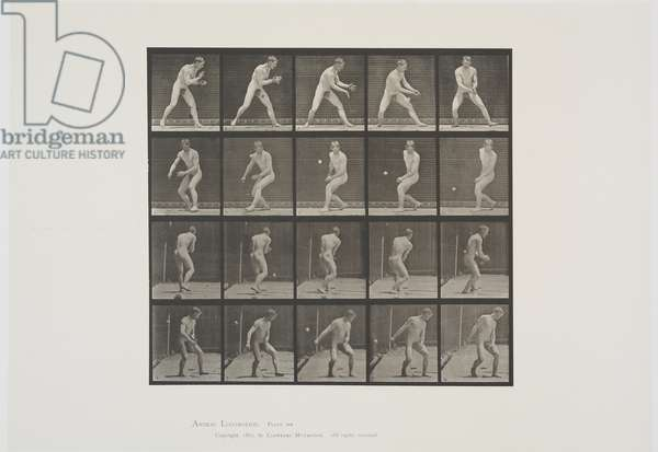 Plate 288 from Animal Locomotion, 1887 (collotype on paper)
