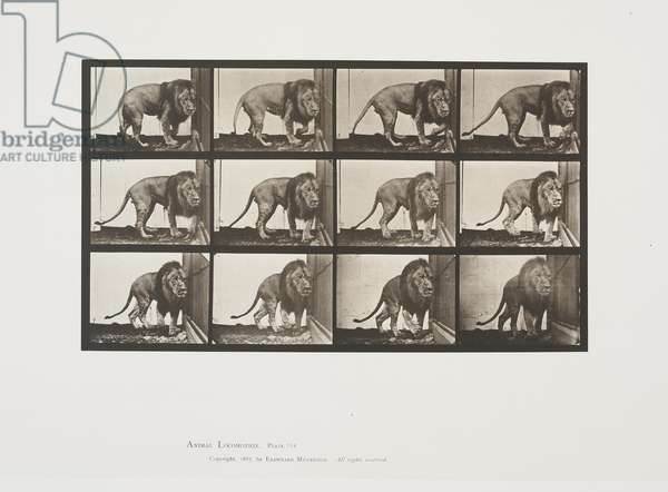 Plate 723 from Animal Locomotion, 1887 (collotype on paper)