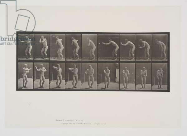 Plate 281 from Animal Locomotion, 1887 (collotype on paper)