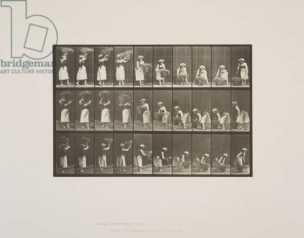 Plate 454 from Animal Locomotion, 1887 (collotype on paper)