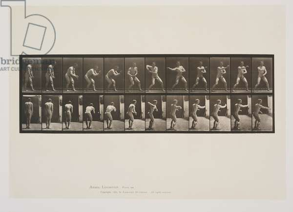 Plate 285 from Animal Locomotion, 1887 (collotype on paper)