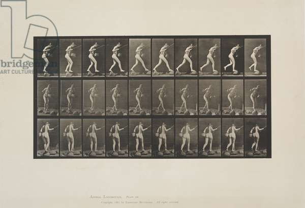 Plate 176 from Animal Locomotion, 1887 (collotype on paper)