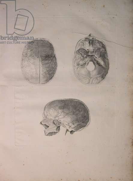 Albinus II, Pl. III, Cranial bone, illustration from 'Tabulae ossium humanorum', by Bernhard Siegfried Albinus (1697-1770), published by J.&H. Verbeek, bibliop. 1753, Leiden, 1753 (engraving)