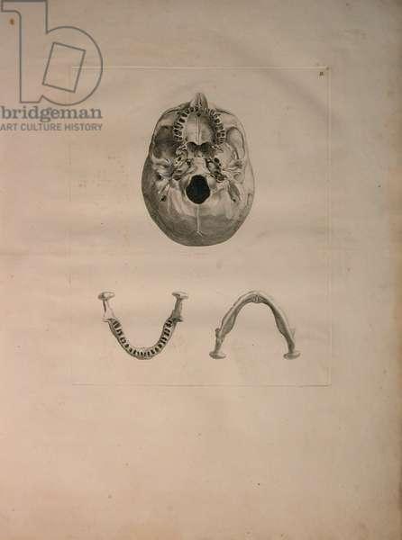 Albinus II, Pl. II, Skull, illustration from 'Tabulae ossium humanorum', by Bernhard Siegfried Albinus (1697-1770), published by J.&H. Verbeek, bibliop. 1753, Leiden, c.1729 (engraving)