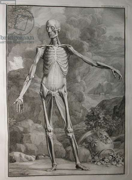 Albinus I, Pl. III: Musculature, illustration from 'Tabulae sceleti et musculorum corporis humani', by Bernhard Siegfried Albinus (1697-1770), published by J.&H. Verbeek, bibliop., Leiden, 1747 (engraving)