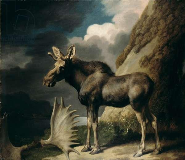 Moose, 1770 (oil on canvas)