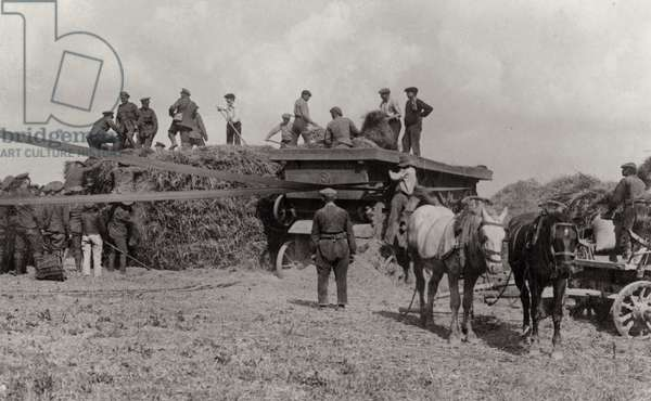 British soldiers making hay while away from the front, Flanders, 1914-18 (b/w photo)