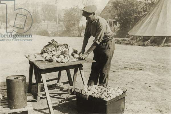 British soldier prepares vegetables for the camp, near Messines, Flanders, 1914-18 (b/w photo)