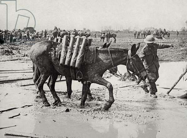 Pack mules with shells moving forward, Battle of Pilckem Ridge, near Ypres, 1 August 1917 (b/w photo)