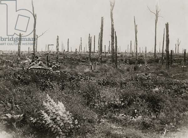 Scene in Delville Wood, Autumn 1917 (b/w photo)